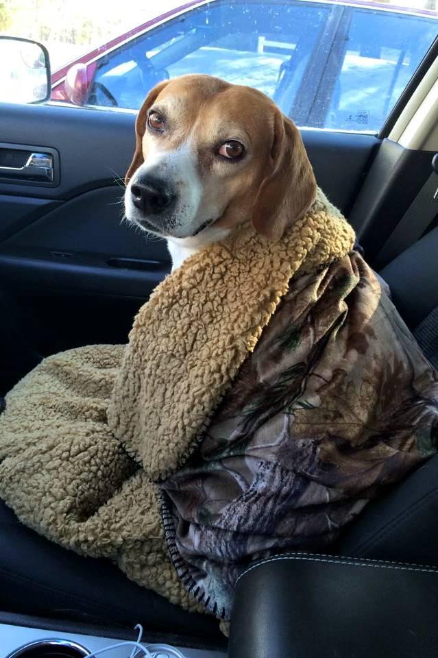 Cuddly warm Rusty!